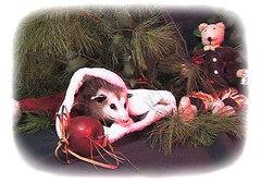 Christmaspossum_3
