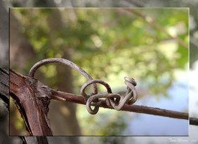 Treeandvine